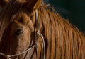 Free Horse Expression Stock Image - 34607811