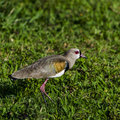 Free Bird On The Grass Stock Images - 34608194