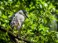 Free Bird On A Tree Stock Photography - 34608332