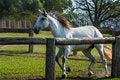 Free Horse Dressage Stock Photos - 34608373
