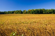 Free Soy Bean Field Royalty Free Stock Photos - 34600448