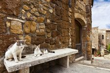 Free Two Cats In A Tuscany Typical Street Stock Photography - 34601092