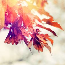 Free Autumn Scene Royalty Free Stock Photo - 34606715