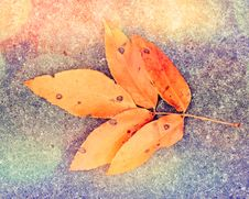 Free Autumn Leaf On The Ground Royalty Free Stock Photography - 34606727