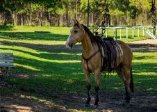 Ready To Ride Royalty Free Stock Image