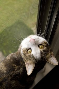 Free Green Eyed Cat Stock Images - 34609704