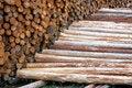 Free Wood Poles In Log Yard Royalty Free Stock Photos - 34613568