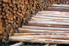 Wood Poles In Log Yard Royalty Free Stock Photos