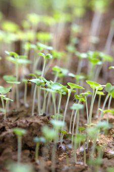 Free Plant Sprouts Growing Out Of Soil Stock Image - 34617981