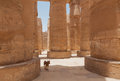 Free Dog  In The Karnak Temple Royalty Free Stock Photo - 34625665