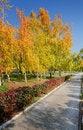 Free Autumn Trees Royalty Free Stock Photo - 34625745