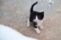 Free Charming Little Kitten Stock Images - 34627624