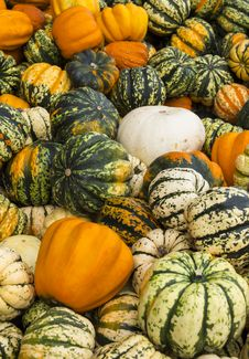 Free Colourful Pumpkins Royalty Free Stock Images - 34623419
