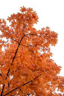 Free Autumn Foliage Stock Photos - 34625763