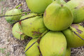 Free Bunch Of Coconuts Stock Images - 34631804