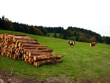 Cows And Logs On Meadow In Alps Stock Image
