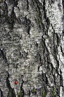 Free Ladybug On A Tree Stock Images - 34637954