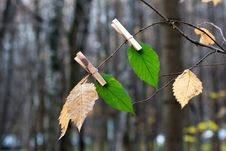 Free Green Leaves On A Pin Stock Photography - 34638062