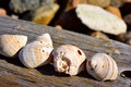 Free Shells Stock Photos - 34647623