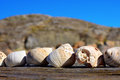 Free Shells Stock Photography - 34647742