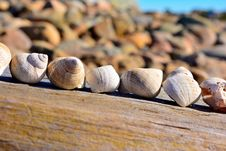 Free Shells Royalty Free Stock Image - 34647456