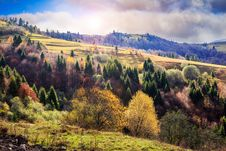 Free Coniferous And Yellowed Trees In Valley On A Mountain Hillside W Royalty Free Stock Photo - 34651895