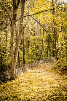 Free Path In Autumn Forest Royalty Free Stock Photography - 34652237