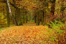 Free Forest In Autumn. Royalty Free Stock Images - 34656869