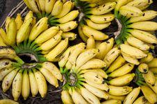 Free Fresh Bananas At Market Place Stock Image - 34657081