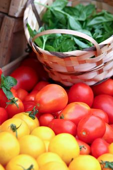 Free Basil And Tomatoes Stock Images - 34660814