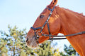 Free Horse Portrait Royalty Free Stock Images - 34685229