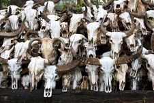 Free Buffalo Skull Stock Photo - 34680570