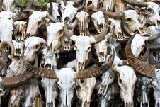 Free Buffalo Skull 5 Royalty Free Stock Image - 34680596