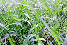Free Green Grass Texture Stock Photo - 34682540