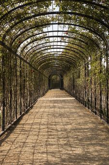 Free The Tunnel Of Flowers Royalty Free Stock Photography - 34686707