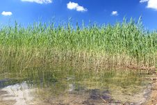 Free Reflected Reeds Stock Photography - 34694322