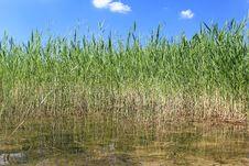 Free Reflected Reeds Stock Photos - 34694323