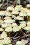 Free Group Of Mushrooms Royalty Free Stock Image - 34695786
