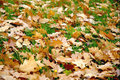 Free Autumn Royalty Free Stock Photo - 3473905