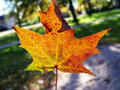 Free Bright Fall Leaf Stock Photos - 3479703