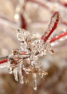 Free Icy Branches Stock Photo - 3470760