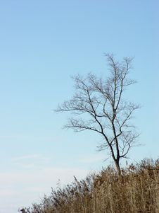 Free Lonely Naked Autumn Tree Royalty Free Stock Photography - 3471127