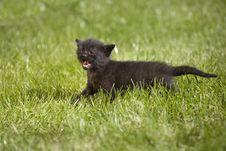Free Kitty Stock Photography - 3471322