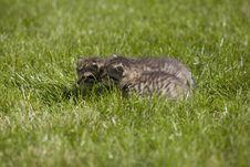 Free Kitty Royalty Free Stock Photos - 3471398