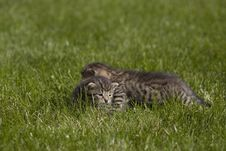 Free Kitty Royalty Free Stock Image - 3471406