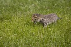 Free Kitty Stock Image - 3471521