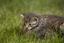 Free Kitty Stock Photography - 3471672