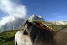 Free Wild Horse Stock Image - 3472191
