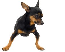 Free Isolated Funny Dog Stock Photos - 3472843