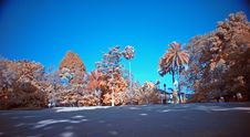 Free Infrared Photo – Tree And Park Stock Photography - 3473102